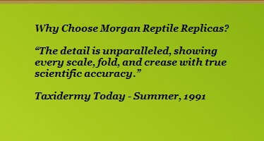 "Why Choose Morgan Reptile Replicas?                                        ""The detail is unparalleled, showing                    every scale, fold, and crease with true                     scientific accuracy.""                                        Taxidermy Today - Summer, 1991"